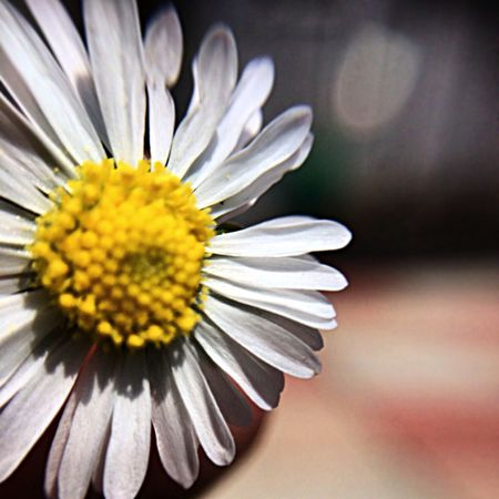 Taking Photos Sun Flowers Depth Of Field
