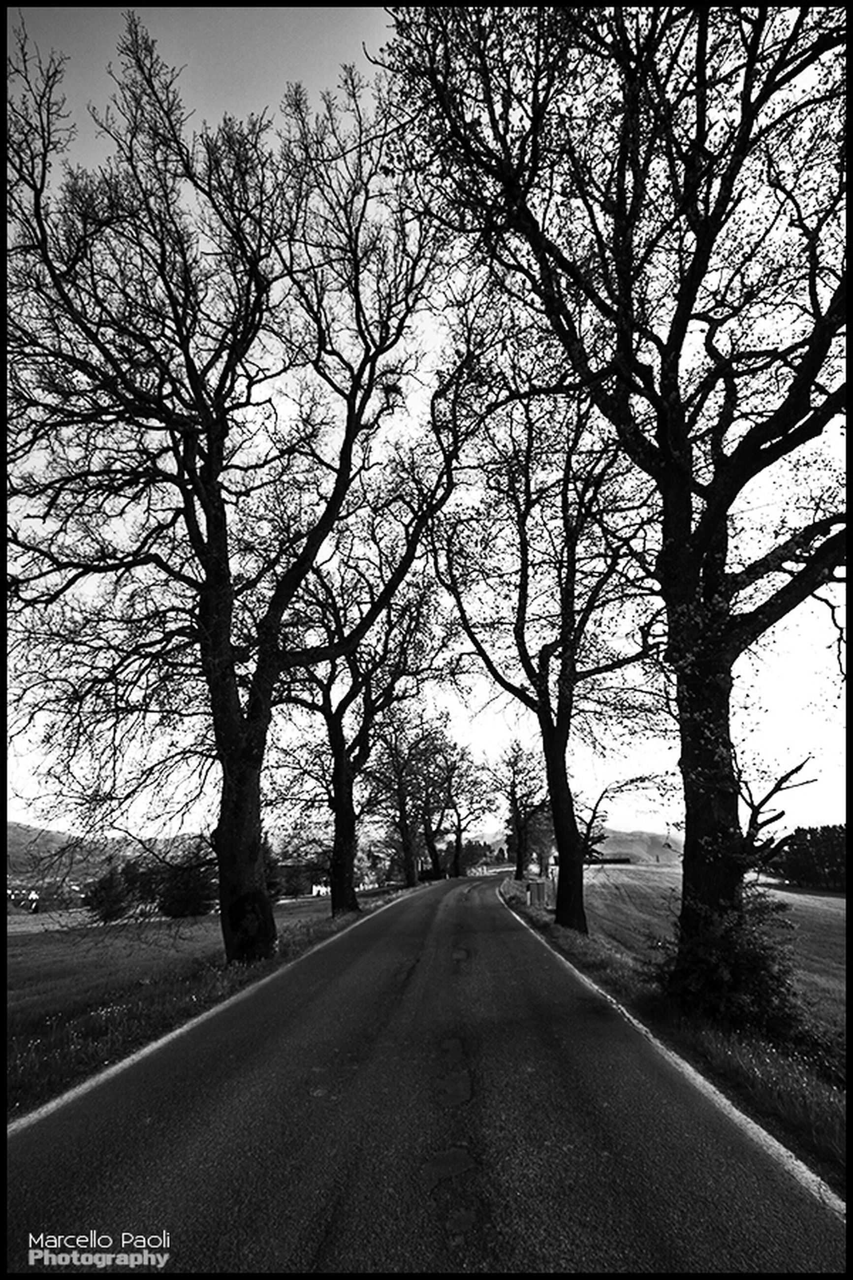 the way forward, tree, road, transportation, bare tree, diminishing perspective, vanishing point, road marking, country road, tranquility, empty road, sky, branch, empty, tranquil scene, nature, transfer print, long, treelined, street