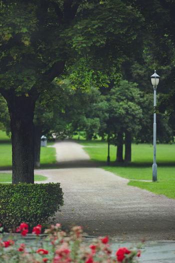 Quiet walk in
