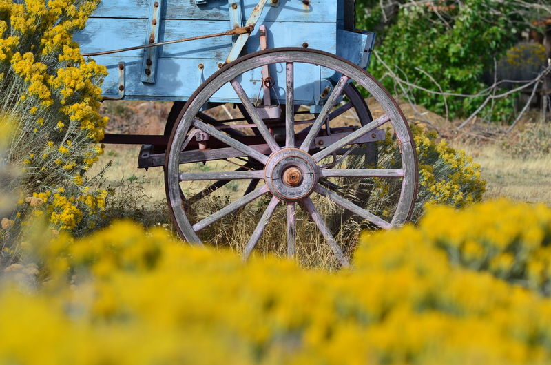 The blue wagon's wheel at columbia george discovery center Oregon Beauty In Nature Blue Wagon Columbia George Discovery Center Field Flower Horse Cart Nature No People Old-fashioned Rural Scene Wagon Wheel Wheel Yellow
