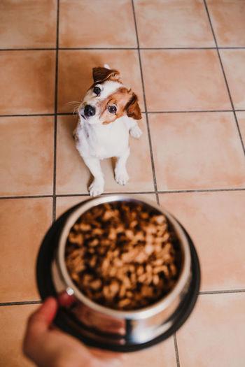 High angle view of dog and food on floor