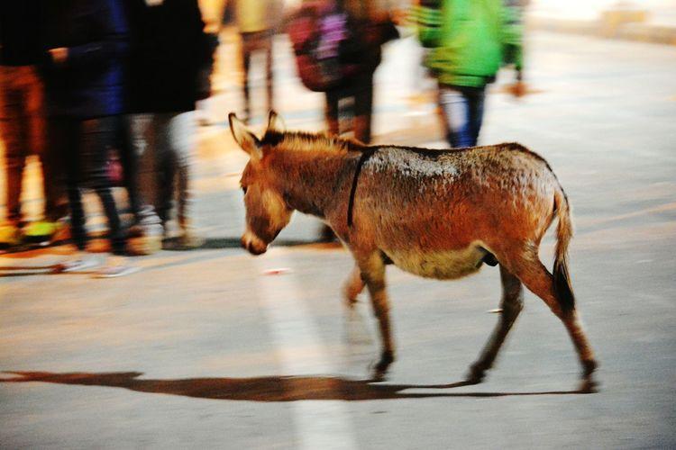 Full length of donkey on street