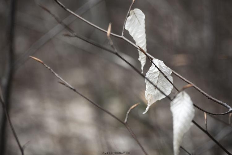 Close-up of dead leaf