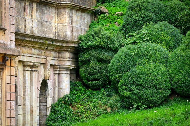 Topiary of human face by built structure in backyard