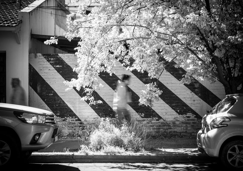 Streetphotography Tree Motion Outdoors Car Building Exterior Day Transportation Land Vehicle Street Photography Street Architecture Streetart Streetphoto_bw Streetphoto Street Life Streets Streetlife Street Photo Streetphotographer