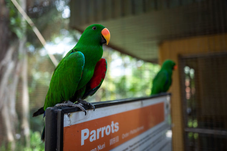 Kuala Lumpur Animal Themes Vertebrate Animal Bird Animal Wildlife Animals In The Wild Parrot Green Color Focus On Foreground Perching One Animal No People Day Animals In Captivity Outdoors Close-up Text Nature