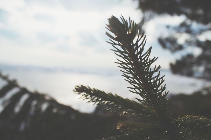Theres always beauty in being close Wildlife Photography Adventure Club Road Less Travelled TheMinimals (less Edit Juxt Photography) Ice Outdoors Pine Pine Tree