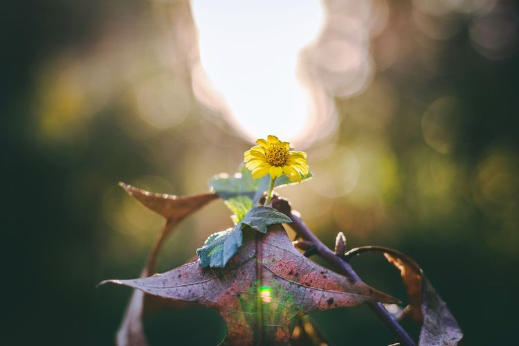 Flower Nature Beauty In Nature Petal Plant Day Growth Focus On Foreground Outdoors Flower Head Leaf Freshness Close-up Fragility No People Animal Themes bokeh first eyeem photo. EyeEmNewHere EyeEm Nature Lover EyeEm Ready   EyeEmNewHere