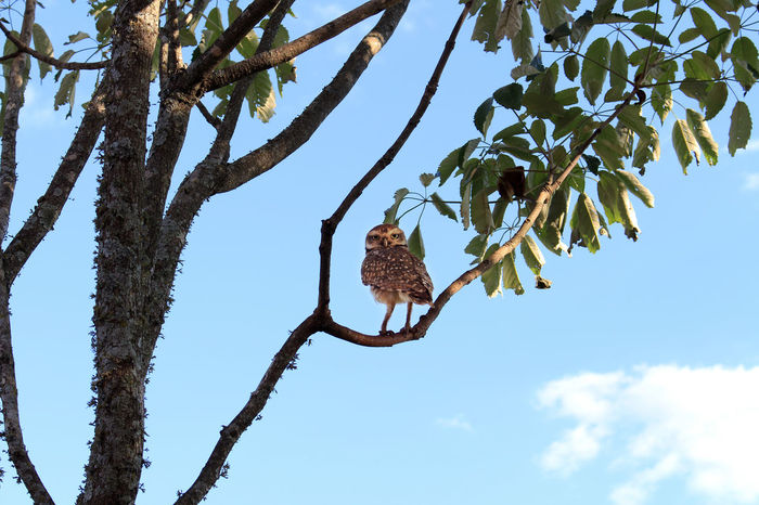 Tree Animal Wildlife Nature One Animal No People Animal Themes Owllife Owls💕 OWL Shoot Owl Photography Owl Nature Low Angle View Beauty In Nature Day Sky