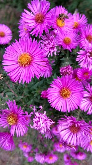 Flower Purple Beauty In Nature Flower Head Pink Color Outdoors Plant Close-up Nature