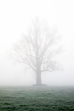 Tree silhouette in the mist in a frost covered grassland Autumn Green Color Light Natural Bare Tree Beauty In Nature Branch Cold Cold Temperature Day Fog Grass Grassland Landscape Lone Mist Misty Morning Nature No People Outdoors Park Scenics Season  Tree Winter Shades Of Winter Shades Of Winter