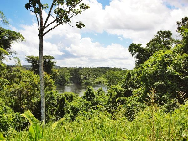 Nature Photography Clouds And Sky Nature Surinam Suriname Jungle Rainforest Jungle River Jungle River South America River