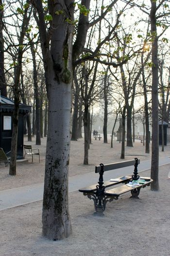 Banc Bench Books Jardin Du Luxembourg Light Livres Lumière Du Soir Nature No People Outdoors Parc Paris Park Park Bench Sunlight Tranquility Tree Wintertime