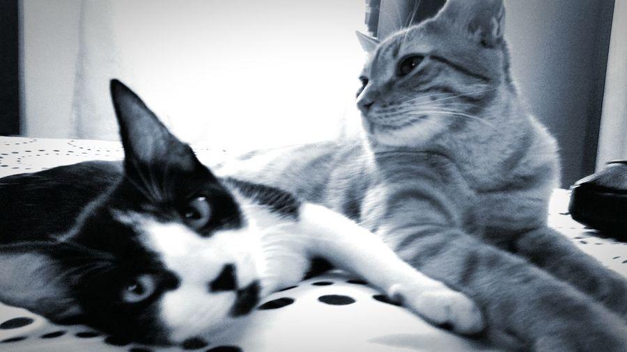 Casal 20 kkk Cat Cats Cat Lovers Pets Taking Photos