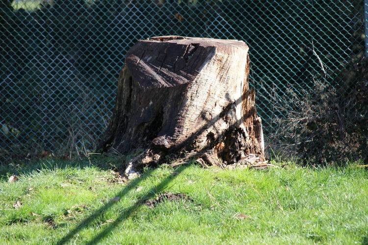 Day Fence Field Grass Nature No People Outdoors Tree Stump