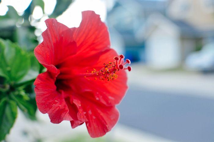 For my love... For You ;-) Flowers,Plants & Garden EyeEm Flower