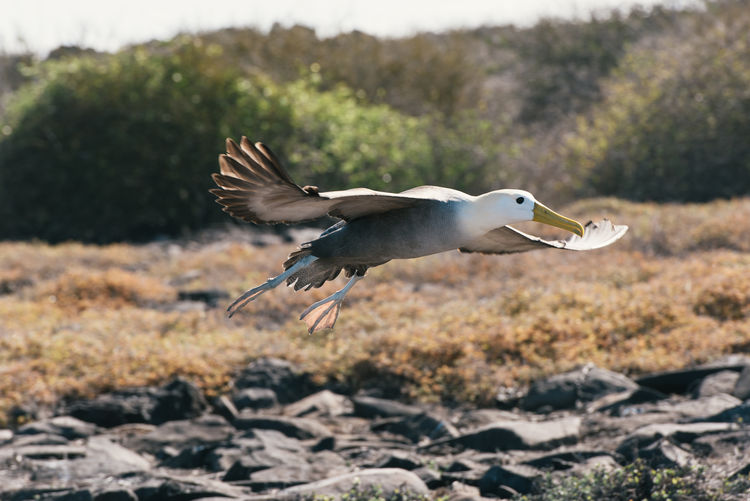 Side view of bird flying over land