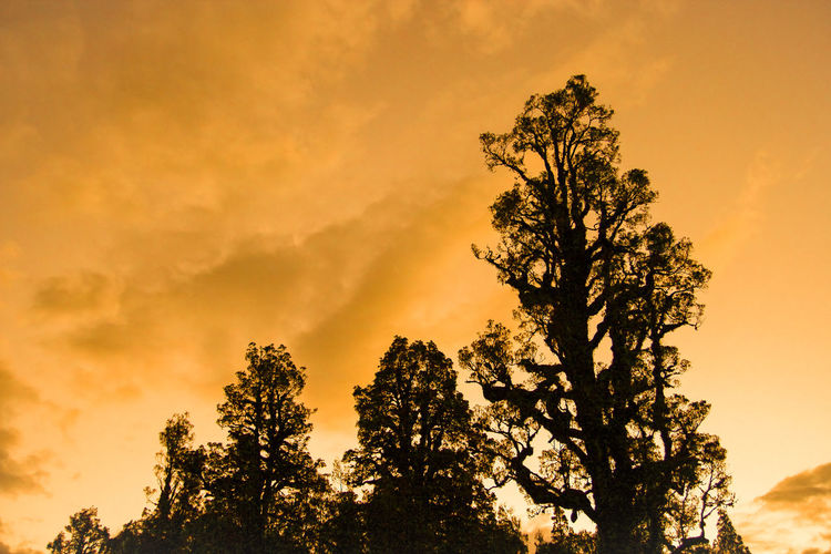 Silhouette of Trees in Warm Light of Sunset at Fox Glacier, New Zealand, in summer. Abstract Attractions Brown Clouds Clouds And Sky Fox Glacier Nature New Zealand Orange Color Rosy Silhouette Sky South Island Sunset Travel Trees Trees And Sky