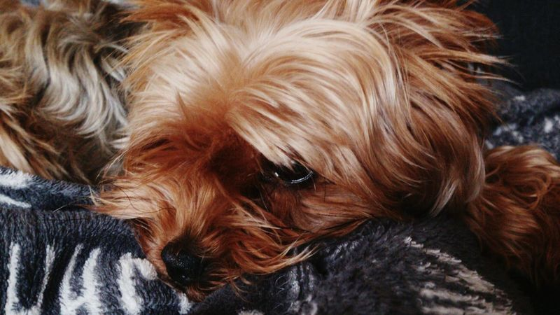 Animal Themes One Animal Domestic Animals Mammal Dog Pets Close-up Indoors  No People Day Nature Front View