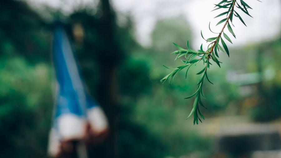Leaves on a rainy day Plant Growth Selective Focus Focus On Foreground Nature Day Close-up Tree Leaf Green Color Outdoors Plant Part Beauty In Nature Coniferous Tree No People Pine Tree Tranquility Vulnerability  Forest