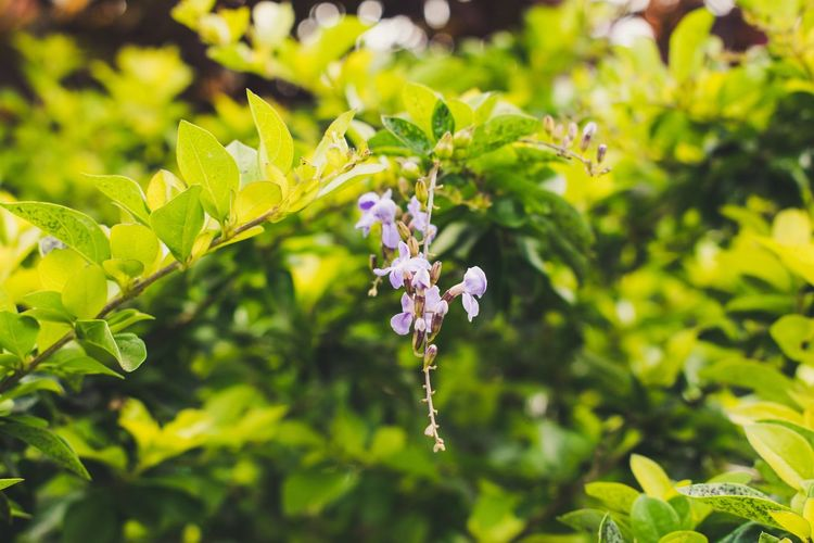 Flower Plant Flowering Plant Growth Beauty In Nature Freshness Leaf Plant Part Fragility Vulnerability  Close-up Focus On Foreground Nature Day Green Color Petal No People Flower Head Sunlight Inflorescence Outdoors Purple