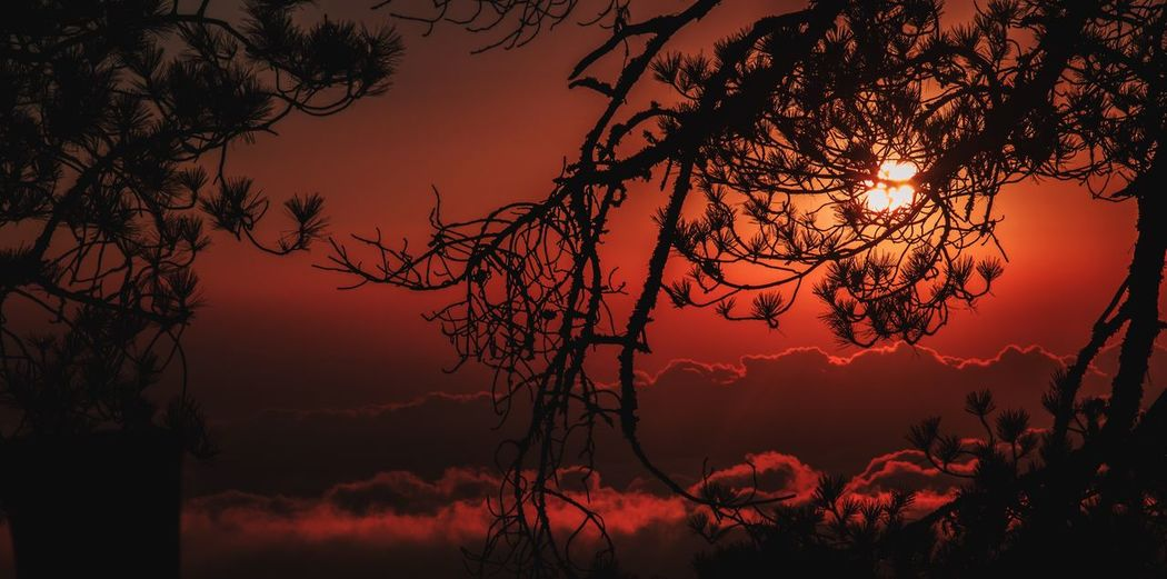 Wake up Sunset Tree Nature Beauty In Nature Tranquility Orange Color Scenics Tranquil Scene Sky Silhouette Branch Majestic No People Outdoors Idyllic Sun Landscape Mountain EyeEm Best Shots EyeEm Nature Lover EyeEmNewHere Eye4photography  EyeEm Selects EyeEm Best Edits Red