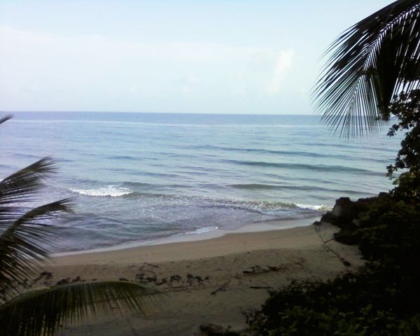 Puerto Rico Rincon Rincon, Puerto Rico Tropical Paradise Tropical Beauty Beach Beauty In Nature Day Horizon Over Water Nature No People Outdoors Palm Tree Sand Scenics Sea Sky Tranquil Scene Tranquility Tree Tropical Tropical Beach Vacation Water Wave