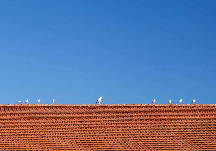 Low Section Seagulls Perching On House Roof Against Clear Blue Sky