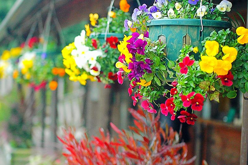 Showcase March Colors Spring Time Spring Flower Collection Flowers Colorful EyeEm Flower Enjoying Life Fleshyplants