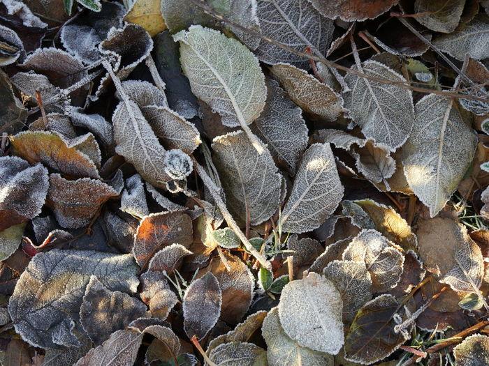 Bodenfrost Blätter Bodenfrost Eiskristalle Nature Raureif  Shades Of Winter Winter Winterfarben Bunt Herbstfarben Kälte Münsterland