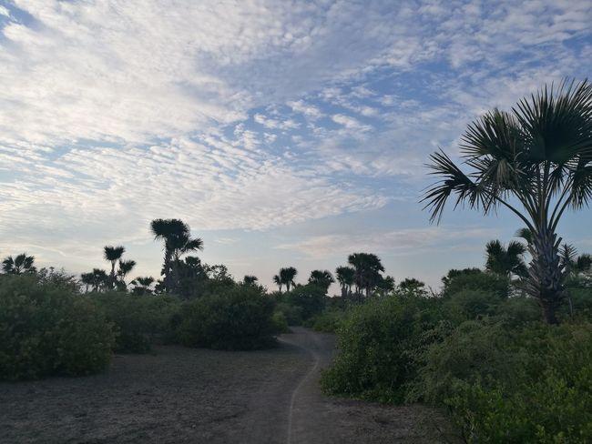 Early morning at Oebelo, Nusa Tenggara Timur Cloud - Sky Nature Sky Outdoors Landscape Beauty In Nature Rural Scene Timorisland Nusatenggaratimur