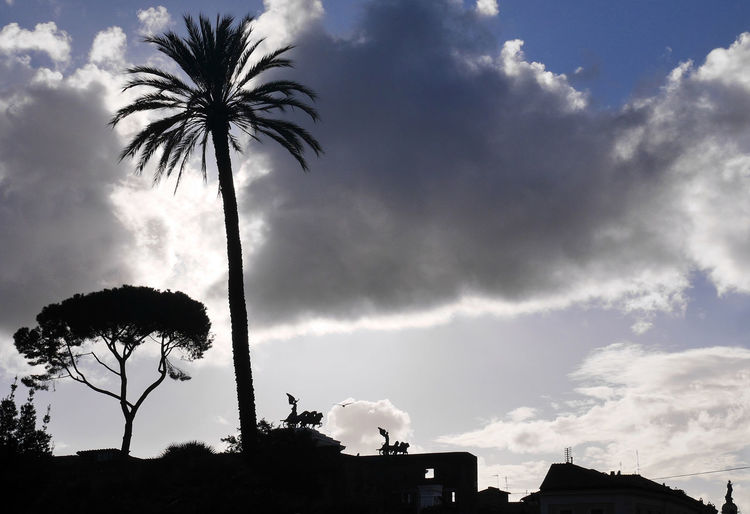 Altare Della Patria Palm Tree Piazza Magnanapoli, Roma Pino Roma Sunset Sunset_collection Turism