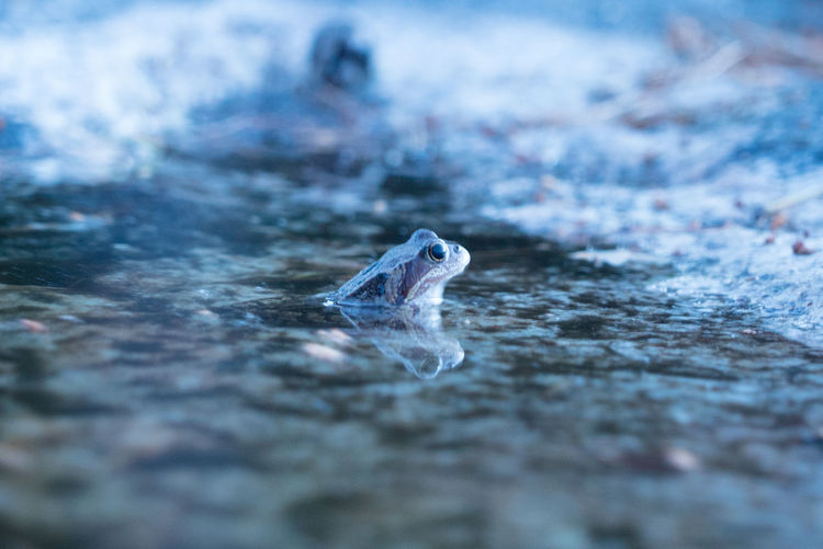 Amphibian Animal Animals In The Wild Close-up Frog Full Moon Long Exposure Low Light Nature Nature One Animal Outdoors Photography Recreational Pursuit Water Wildlife