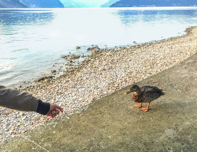 Hello Ducky Camping Animal Bird Day Duck Human Hand Nature Outdoors Sea Shore Vacations Water Focus On The Story Be Brave