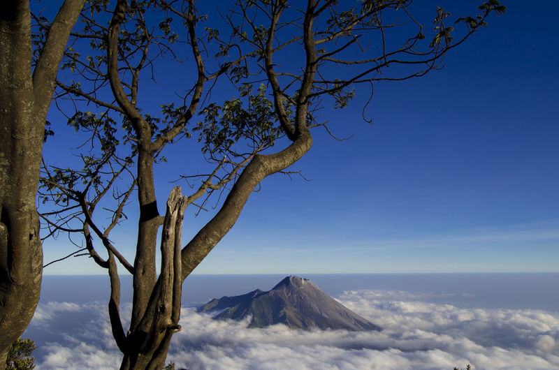 Tree on mountain against blue sky