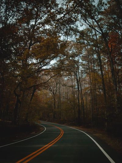 Bend in the road Tree Road Plant The Way Forward Direction Transportation Sign No People Nature Tranquility Forest Tranquil Scene Day Beauty In Nature Double Yellow Line