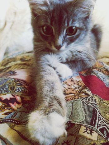 Cats taking selfies?❤️ My Cat Catselfie