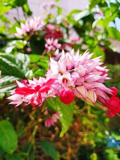 Nature Flowers,Plants & Garden Relaxing Flower Collection Flowers