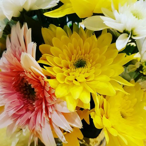 bouquet of daisy on a dining table of a wedding event Flower Head Flower Yellow Petal Multi Colored Underwater Close-up Plant Stamen In Bloom Botany Plant Life Blooming Focus