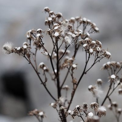 Flowers Flower Winter Desaturated Ireland Shallow Depth Of Field