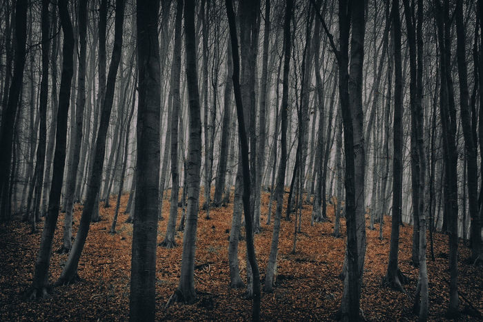 Mystic forest in autumn Outdoors Tree Tree Trunk Trekking Wood WoodLand Background Autumn Dark Fantasy Foggy Forest Graphic Grey Hillside Mystic Nature Rural Winter Wallpaper Leaves Yellow Scenic Plant Non-urban
