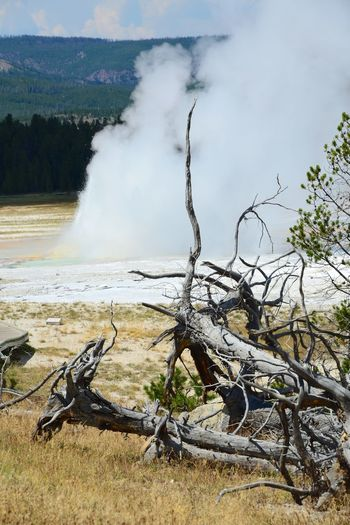 Dead Tree On Field By Geyser Emitting Smoke At Yellowstone National Park