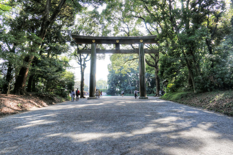 Arch Day Doorway Holiday Holiday Destination Japan Meiji Shrine Outdoors Tokyo TORII Tourist Attraction  Tree
