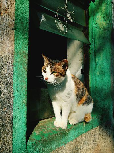 Stray tabby cat outdoors
