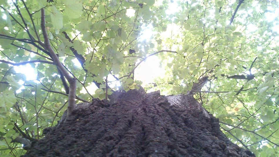 Tree Trunk Lifestyles Low Angle View Beauty In Nature Confidence  Looking At Camera Tranquil Scene Non-urban Scene Tranquility Outdoors Alquimia Long Hair Day Sky Vacations Nature Weekend Activities Building Exterior Young Women Mammal Beauty Scenics Animal Themes First Eyeem Photo Domestic Cat