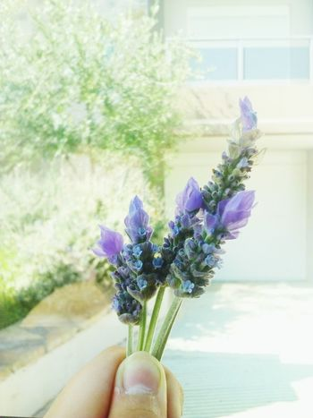 Flower Human Body Part Human Hand Window Close-up Fragility Day Purple Nature Freshness Focus On Foreground One Person Holding Plant Flower Head Growth Indoors  Beauty In Nature People Sky Live For The Story Let's Go. Together. The Week Of Eyeem