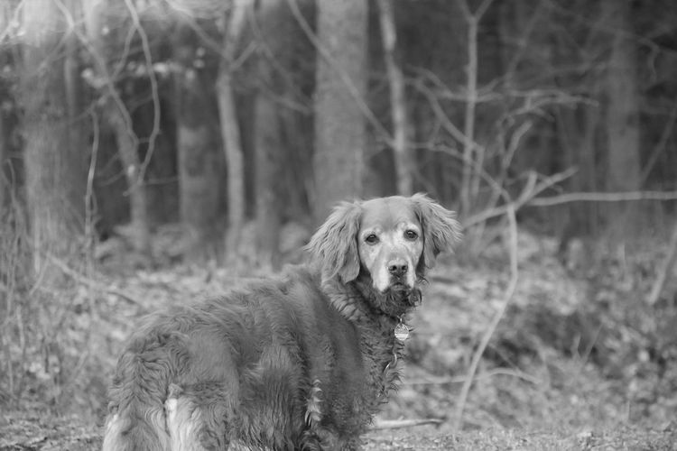 Portrait of a dog in the forest