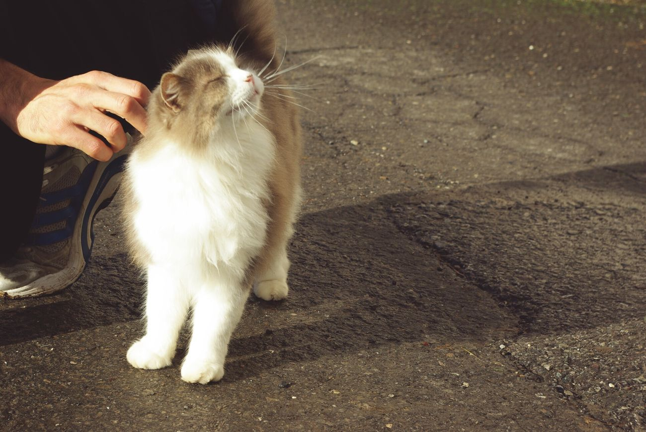 Cropped image of man stoking cat on footpath