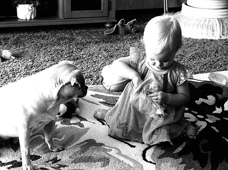 I'm waiting...I'm waiting thinks the patient dog. C'mon! I Love My Dog Children Photography Dog And Baby Bkack&withe Pet Pug Babygirl Treats Blackandwhite Photography