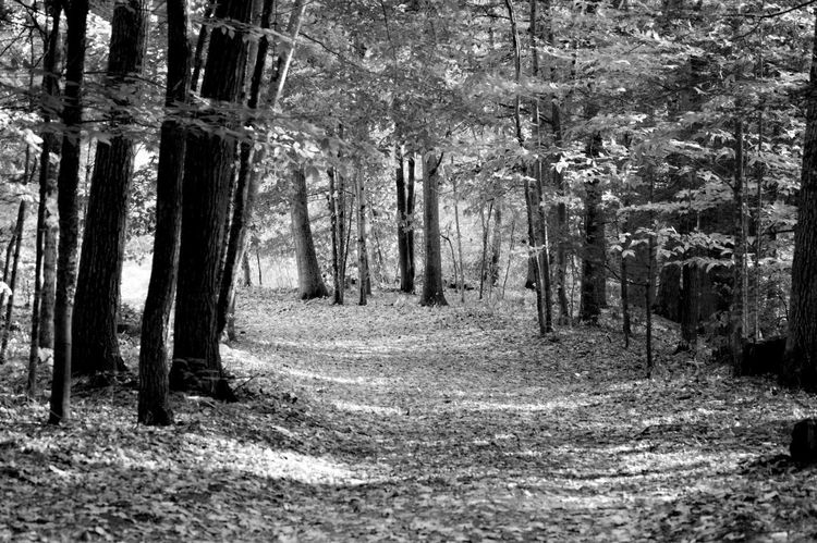 Nature Forest Beauty In Nature Tranquility Tranquil Scene Scenics Tree Growth Leaves Wooded Path Blackandwhite